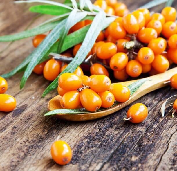 Sanddorn-Beere das Vitamin-C Nahrungsmittel