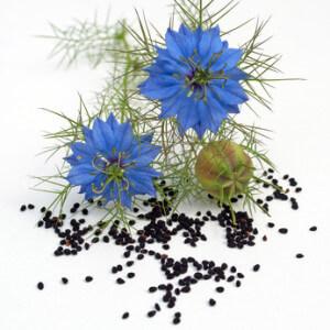 Schwarzkümmel-Samen