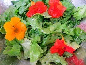 Kapuzinerkresse-Salat