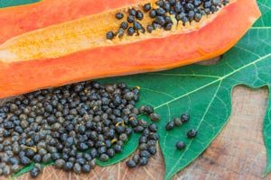papayakerne-papaya-blaetter