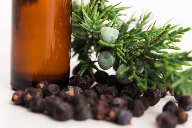 Wacholderöl bei Verdauungsproblemen