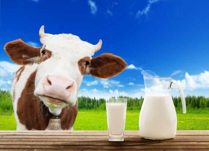I❶I Was ist eigentlich Colostrum bzw. Biestmilch?