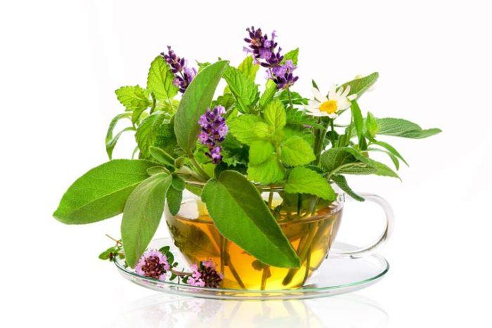 I❶I Wie Sie ihren Körper mit Tee entgiften