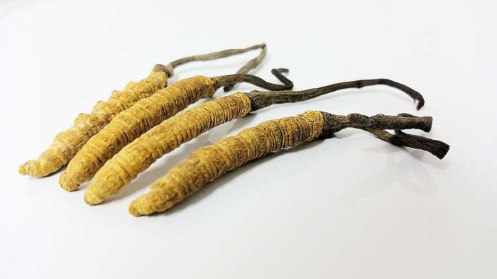 Cordyceps – Wirkung & Anwendung des Heilpilzes