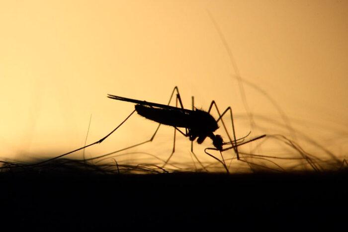 Mit der richtigen Ernährung gegen Parasiten und Würmer vorgehen